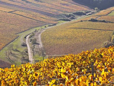 Burgundy &#8211; Chablis <br /> &nbsp;