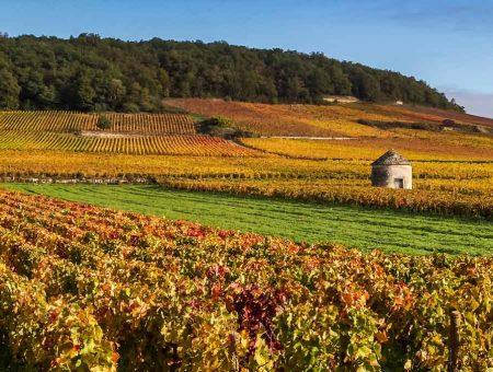 Bourgogne – Côte de Beaune